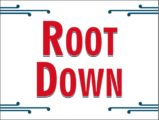 Root Down1